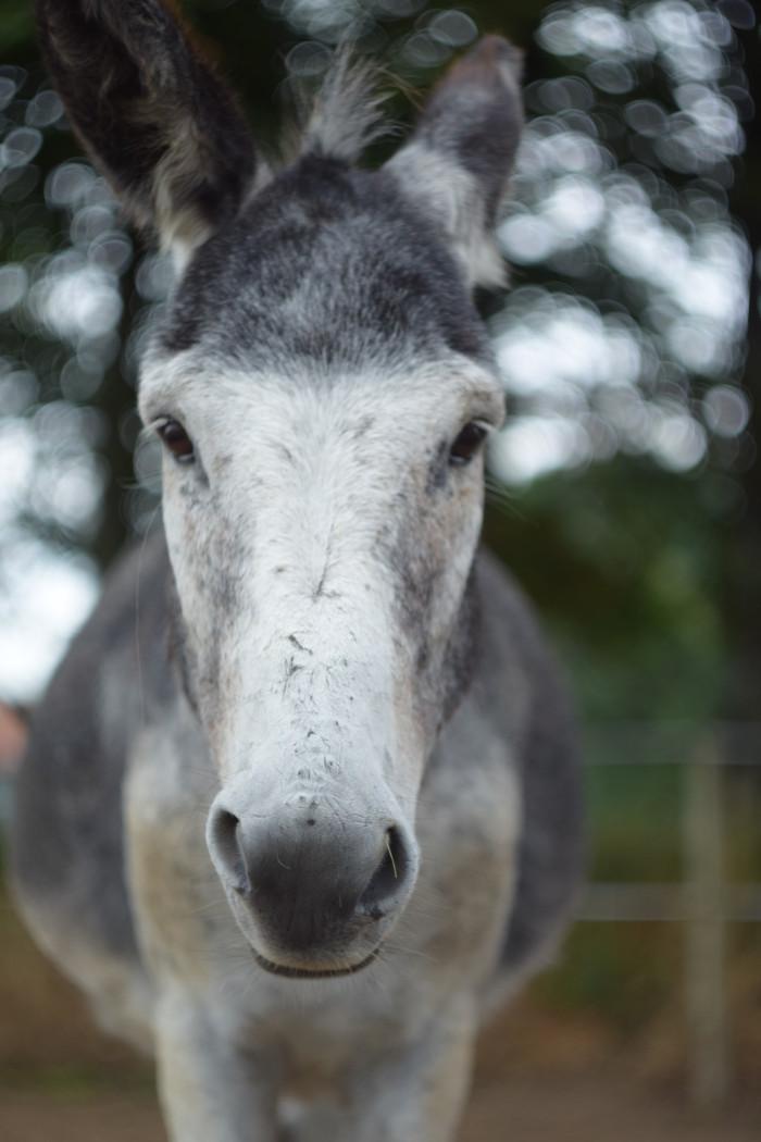 Unser Esel (1)
