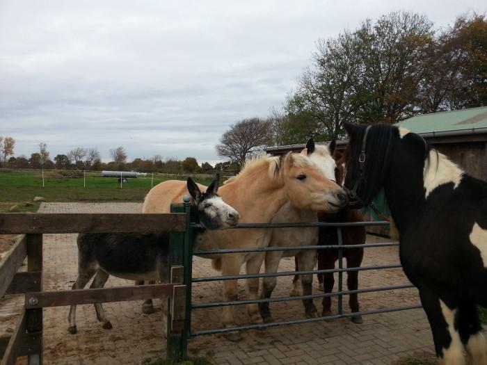 Pferde_und_Esel