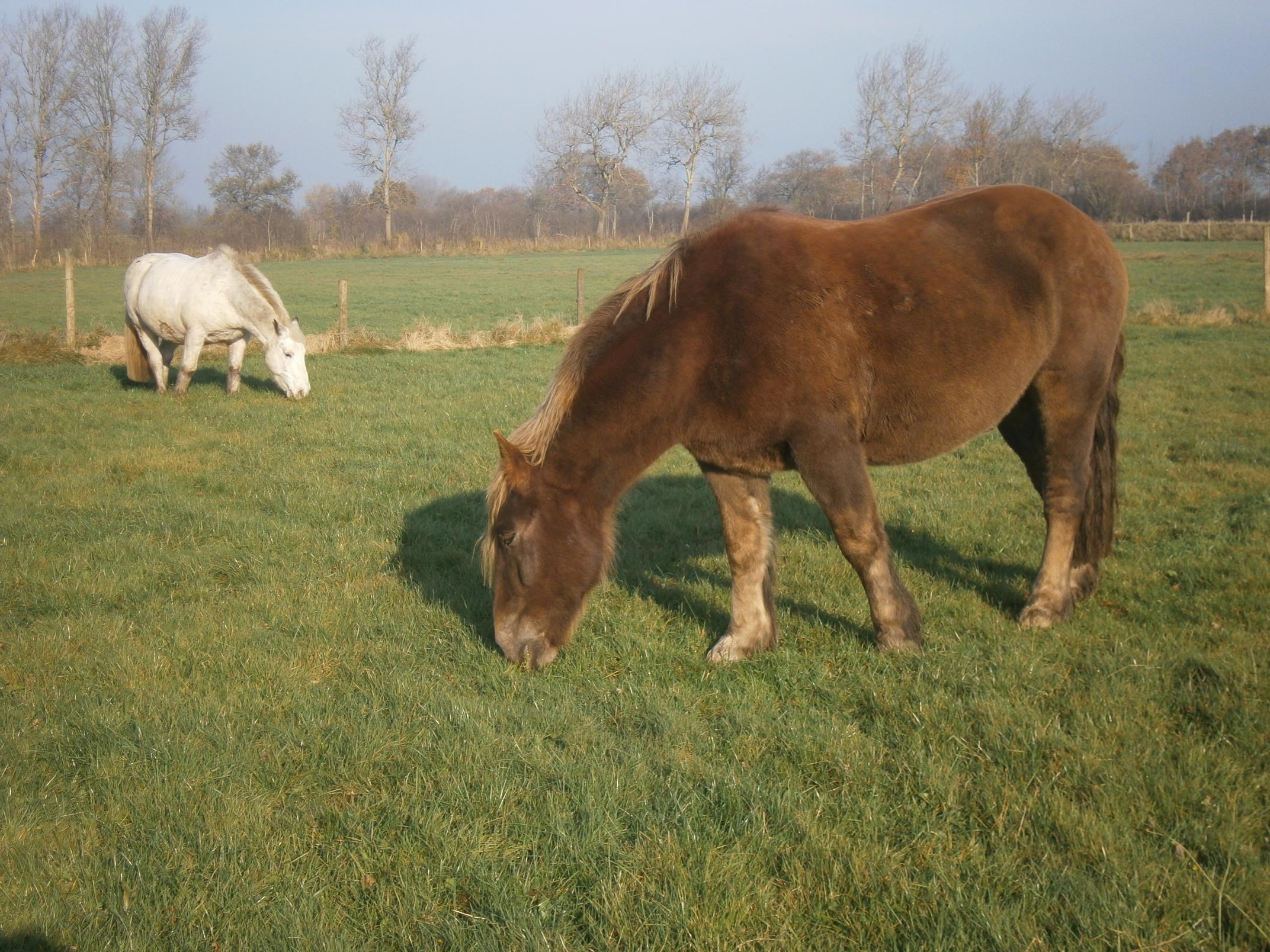 Jugendhof_Pferde