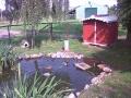 Fische und Enten